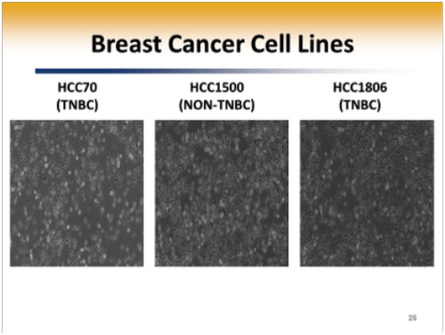 Triple negative breast cancer cell line
